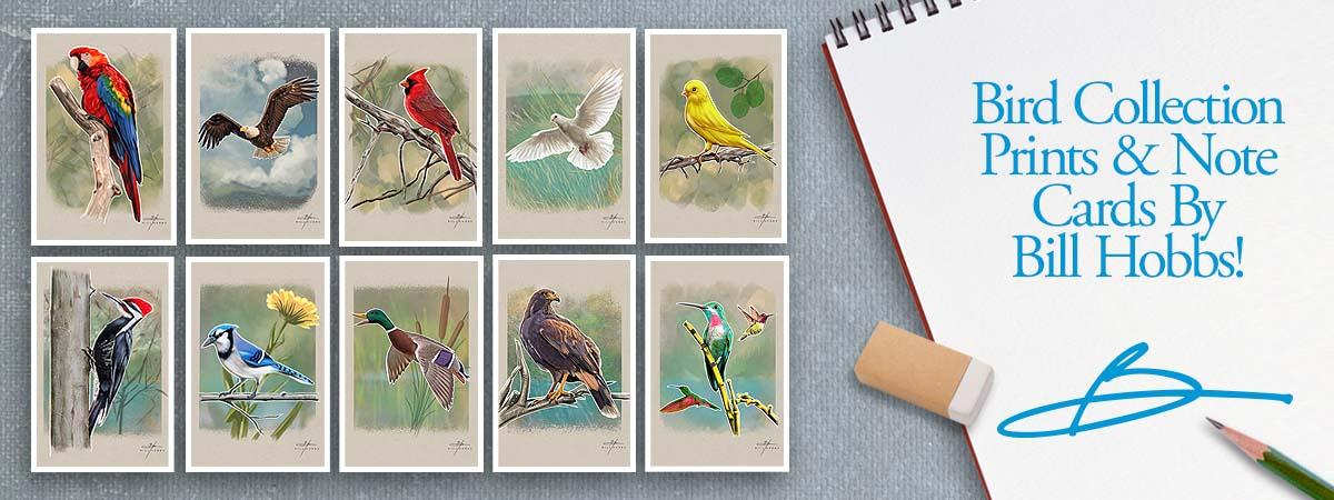 Bird Collection Prints