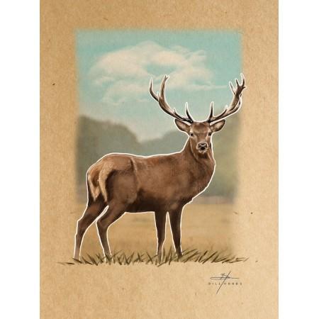 Deer - Buck